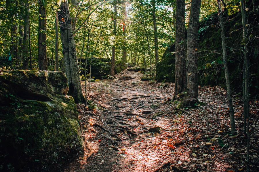 Rock City State Forest NY- Little Rock City Nature Loop Trail