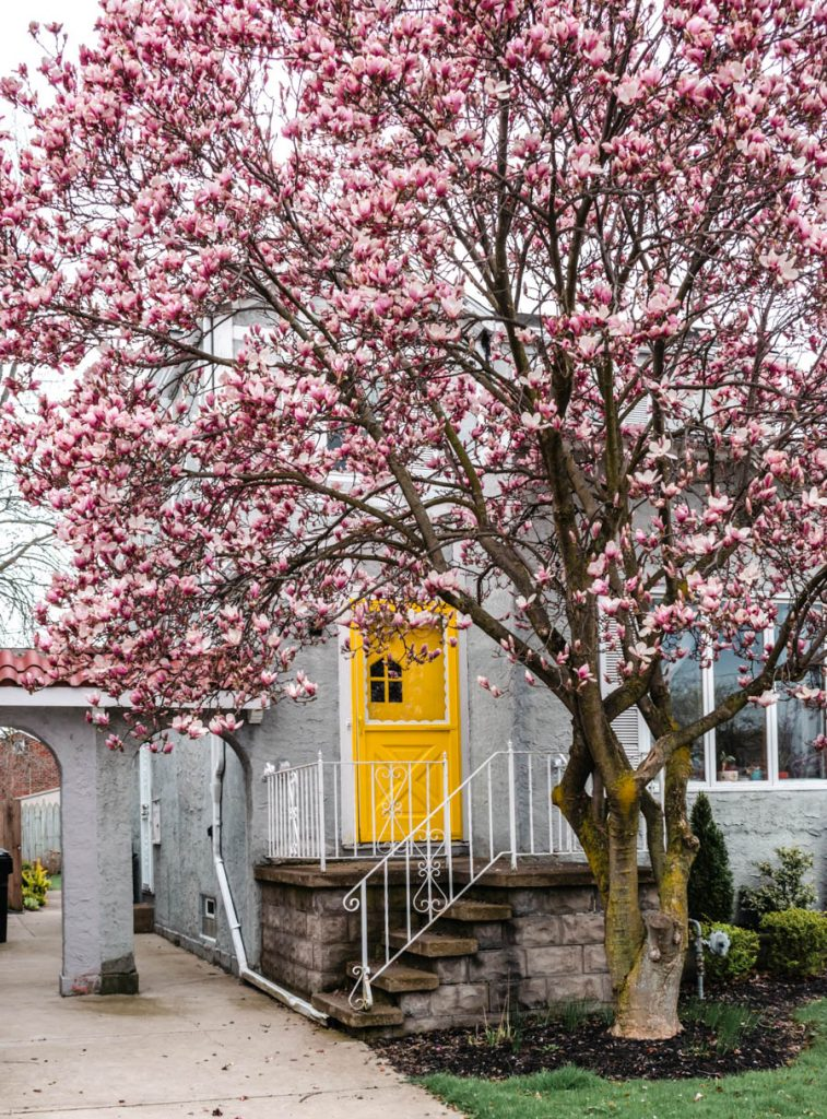House with Cherry Blossoms in Buffalo