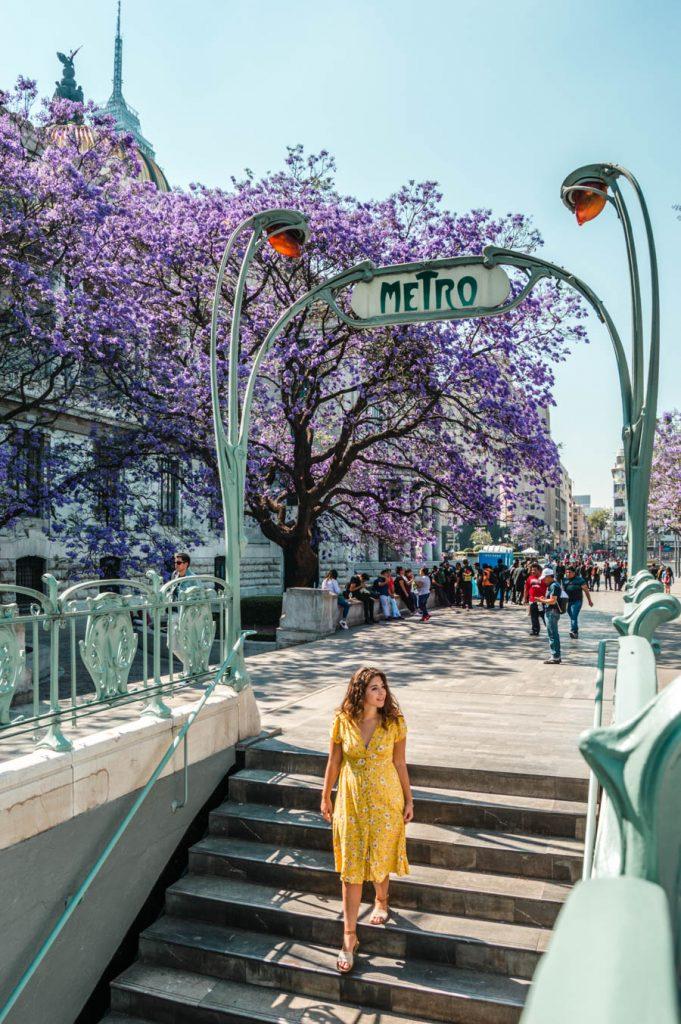 Jacaranda Trees Alameda Central