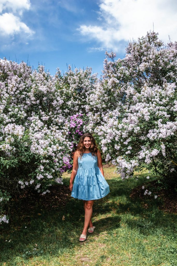 Highland Park Lilacs - Things to do in Rochester NY
