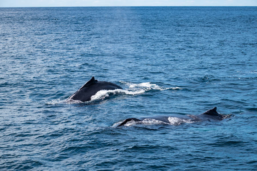 Things to do in Cape Ann MA - Whale Watching